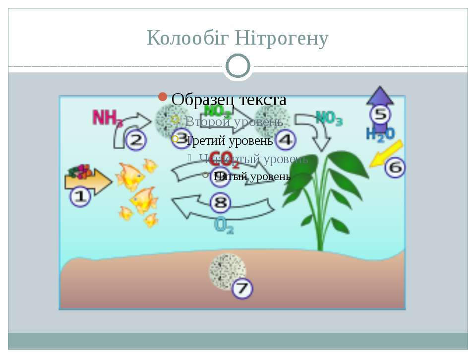 Колообіг Нітрогену З атмосфери азот надходить у грунт у вгляді оксидів і інши...