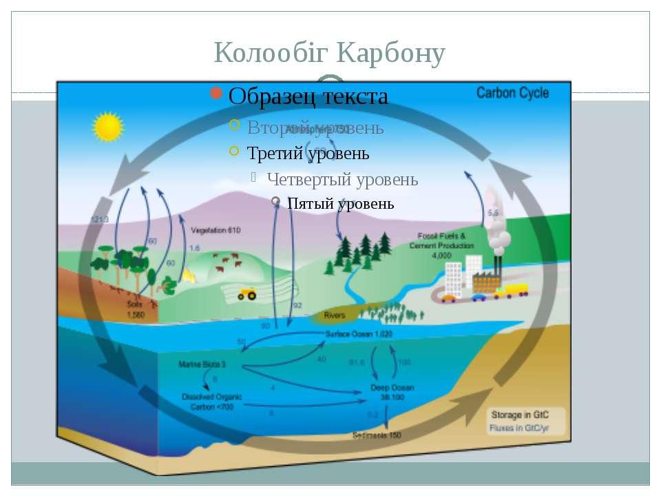 Колообіг Карбону Автотрофи засвоюютьтя вуглекислий газ з атмосфери і синтезую...