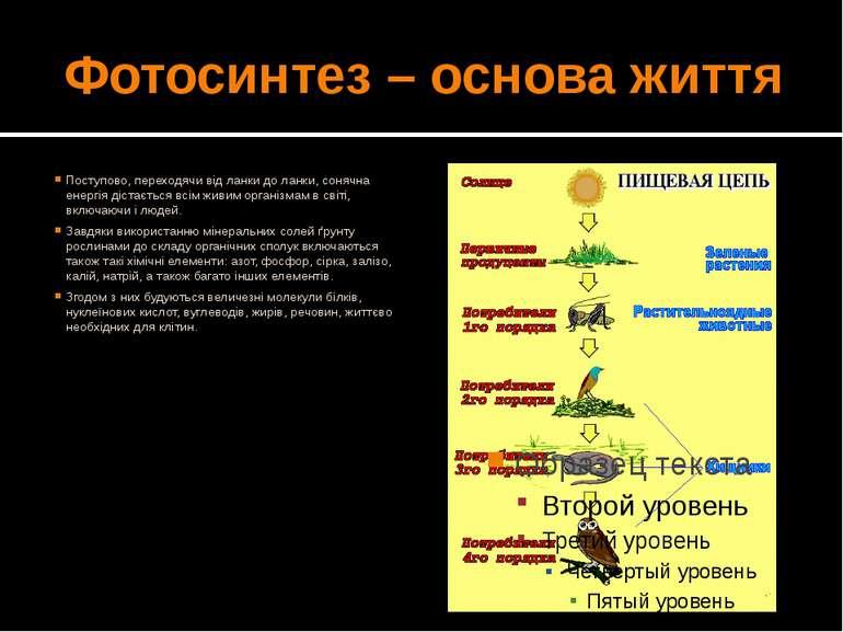 Фотосинтез – основа життя Поступово, переходячи від ланки до ланки, сонячна е...