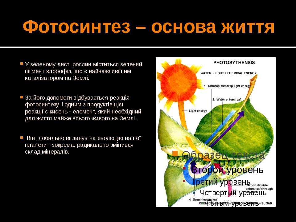 Фотосинтез – основа життя У зеленому листі рослин міститься зелений пігмент х...