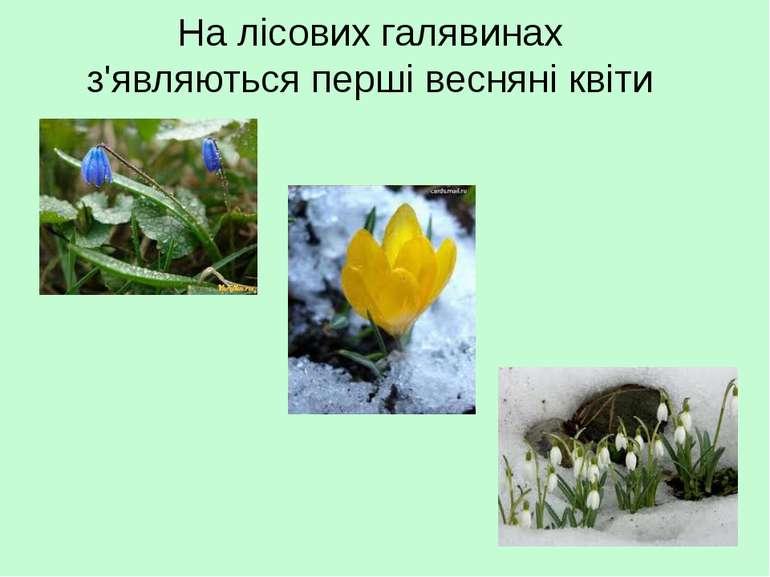 На лісових галявинах з'являються перші весняні квіти