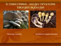 ЇСТІВНІ ГРИБИ – БІОДЕСТРУКТОРИ ТВЕРДИХ ВІДХОДІВ Pleurotus osteatus Stropharіa...
