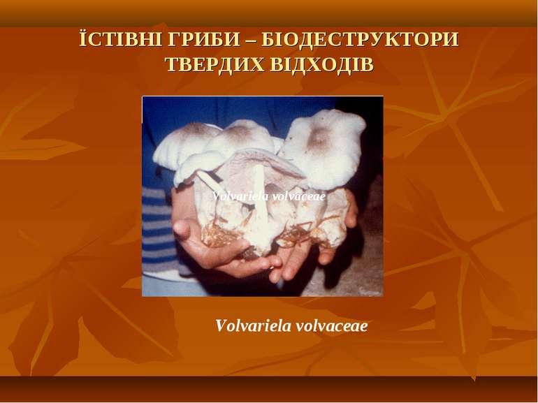 ЇСТІВНІ ГРИБИ – БІОДЕСТРУКТОРИ ТВЕРДИХ ВІДХОДІВ Volvarіela volvaceae Volvarіe...
