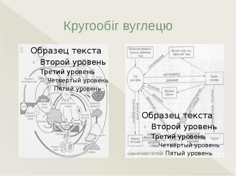 Кругообіг вуглецю Кругообіг вуглецю. Основним елементом живих організмів Земл...
