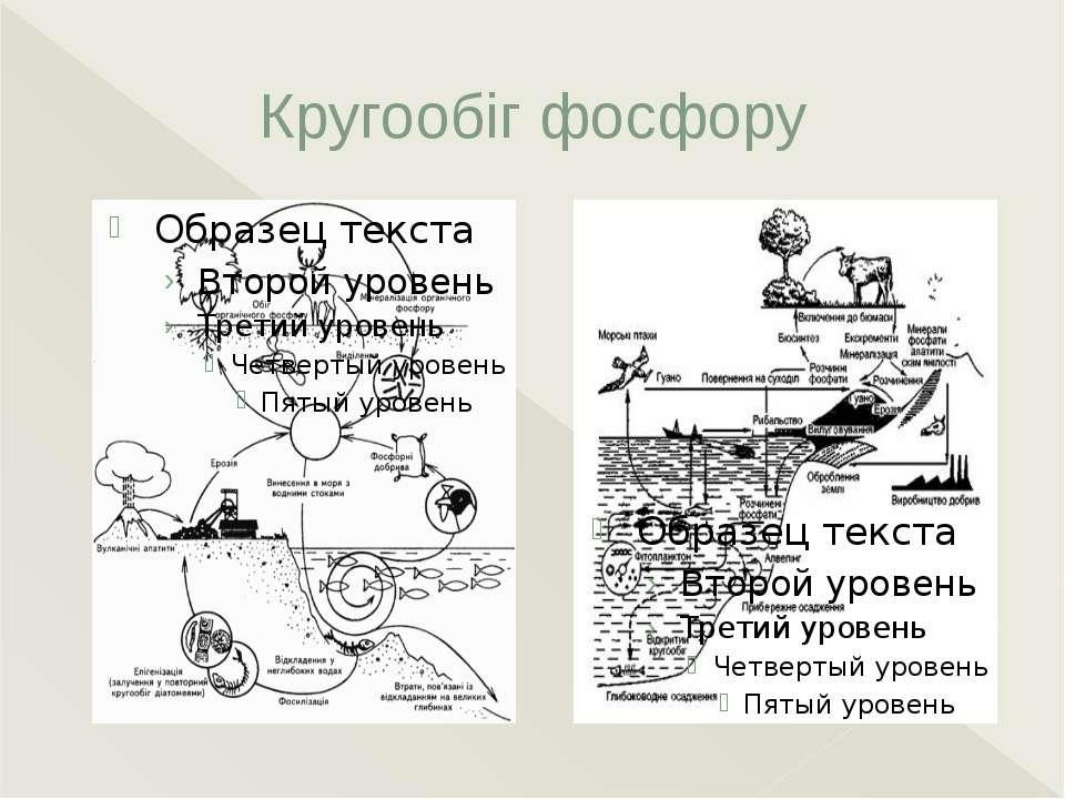 Кругообіг фосфору Кругообіг фосфору. Запаси фосфору, що доступні живим органі...