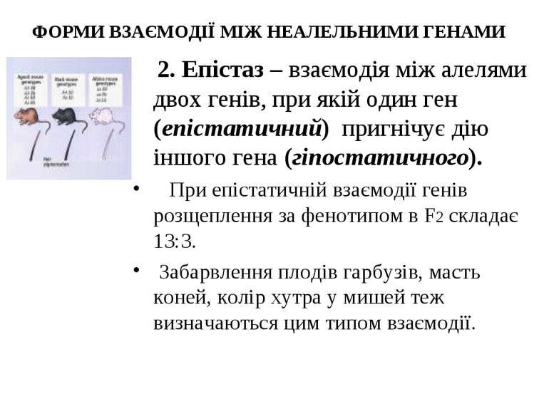 ФОРМИ ВЗАЄМОДІЇ МІЖ НЕАЛЕЛЬНИМИ ГЕНАМИ 2. Епістаз – взаємодія між алелями дво...