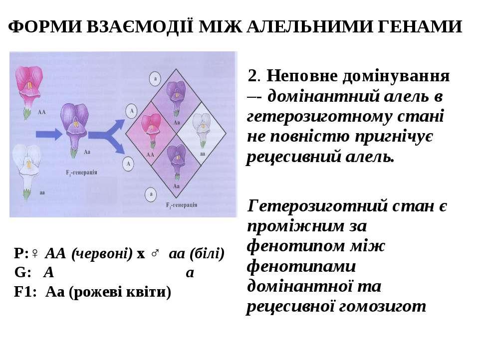 ФОРМИ ВЗАЄМОДІЇ МІЖ АЛЕЛЬНИМИ ГЕНАМИ 2. Неповне домінування –- домінантний ал...