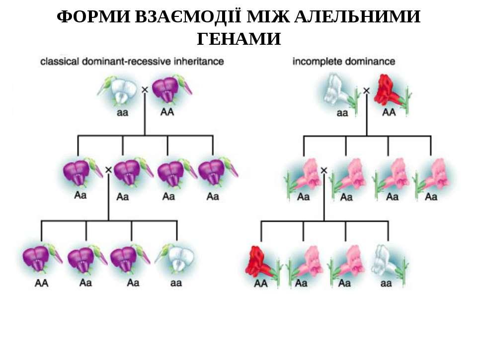 ФОРМИ ВЗАЄМОДІЇ МІЖ АЛЕЛЬНИМИ ГЕНАМИ 2 - полное доминирование 3 - неполное до...