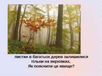 листки в багатьох дерев залишилися тільки на верхівках. Як пояснити це явище?