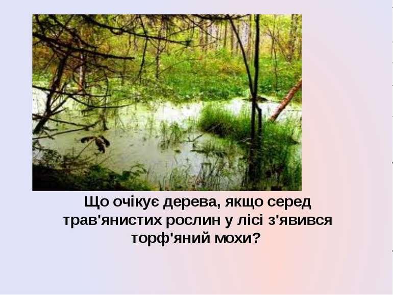 Що очікує дерева, якщо серед трав'янистих рослин у лісі з'явився торф'яний мохи?