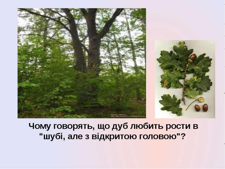 """Чому говорять, що дуб любить рости в """"шубі, але з відкритою головою""""?"""