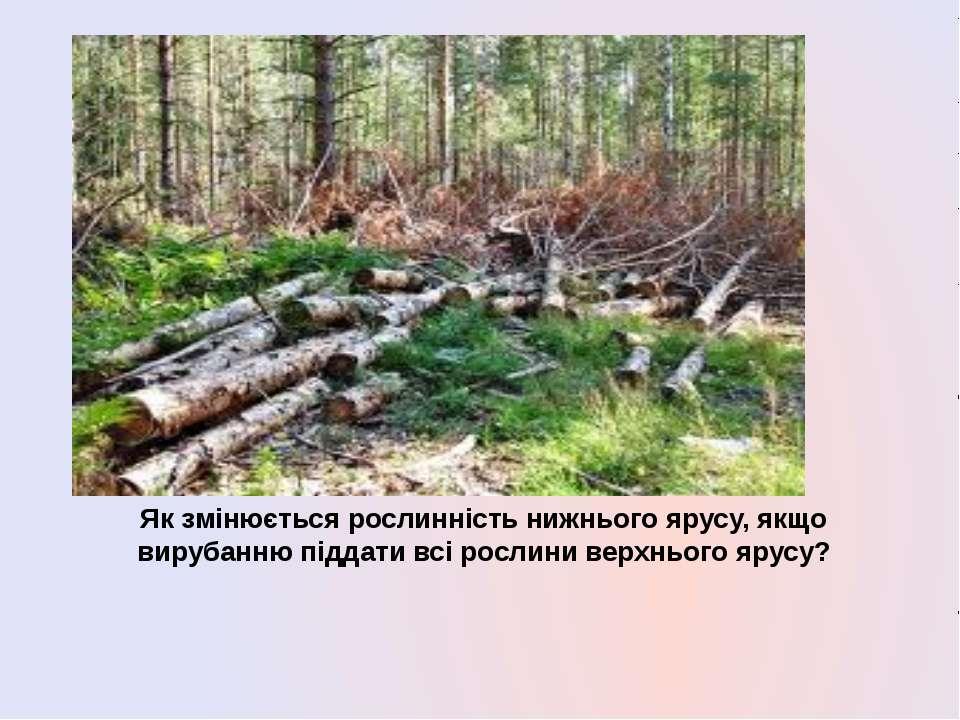 Як змінюється рослинність нижнього ярусу, якщо вирубанню піддати всі рослини ...