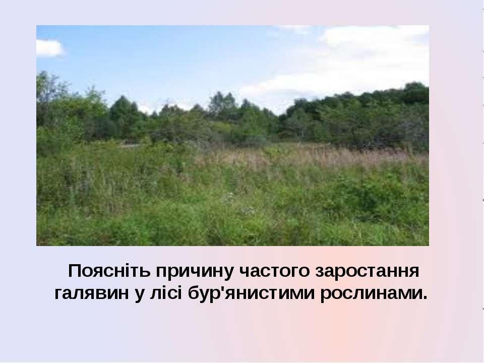 Поясніть причину частого заростання галявин у лісі бур'янистими рослинами.