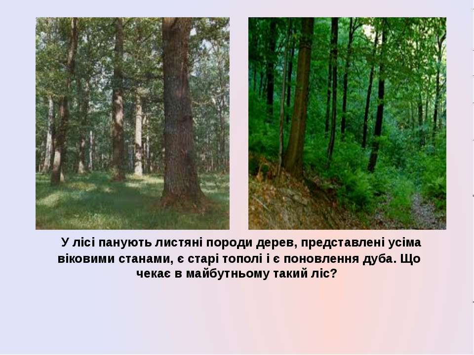 У лісі панують листяні породи дерев, представлені усіма віковими станами, є с...
