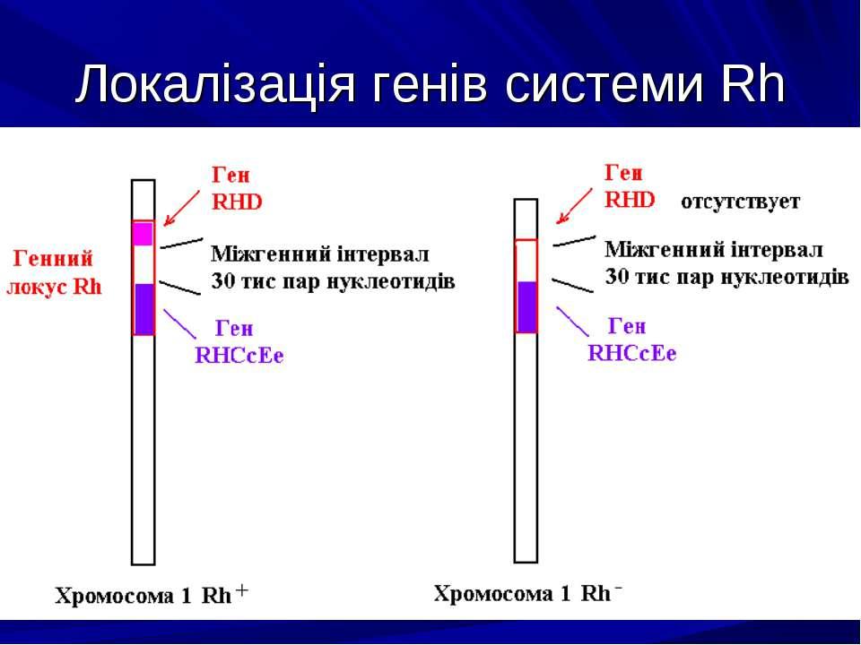 Локалізація генів системи Rh