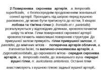 2.Поверхнева скронева артерія, a. temporalis superficialis, є безпосереднім п...