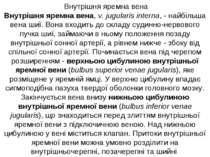 Внутрішня яремна вена Внутрішня яремна вена, v. jugulаris internа, - найбільш...