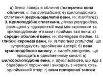 д) бічної поверхні обличчя (поперечна вена обличчя, v. transversafaciei); е) ...