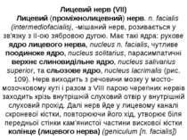 Лицевий нерв (VII) Лицевий (проміжнолицевний) нерв. n. facialis (intermediofa...