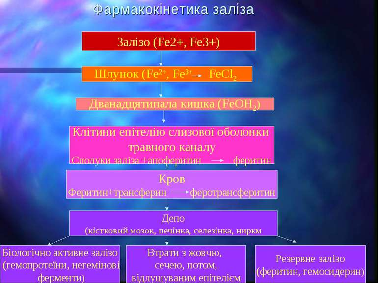 Фармакокінетика заліза Залізо (Fe2+, Fe3+) Шлунок (Fe2+, Fe3+ FeCl2 Дванадцят...