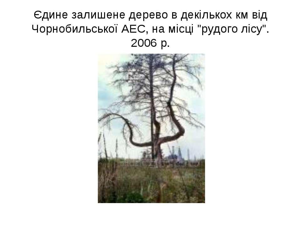 """Єдине залишене дерево в декількох км від Чорнобильської АЕС, на місці """"рудого..."""