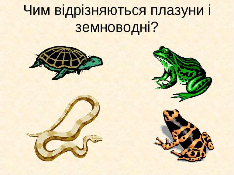 Чим відрізняються плазуни і земноводні?