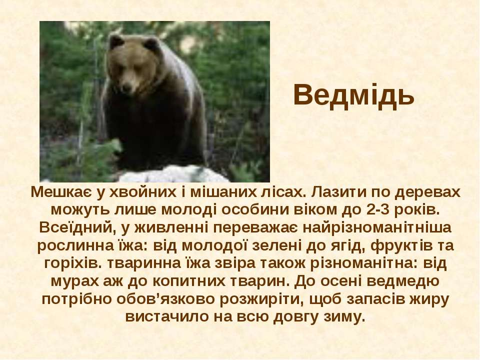 Ведмідь Мешкає у хвойних і мішаних лісах. Лазити по деревах можуть лише молод...