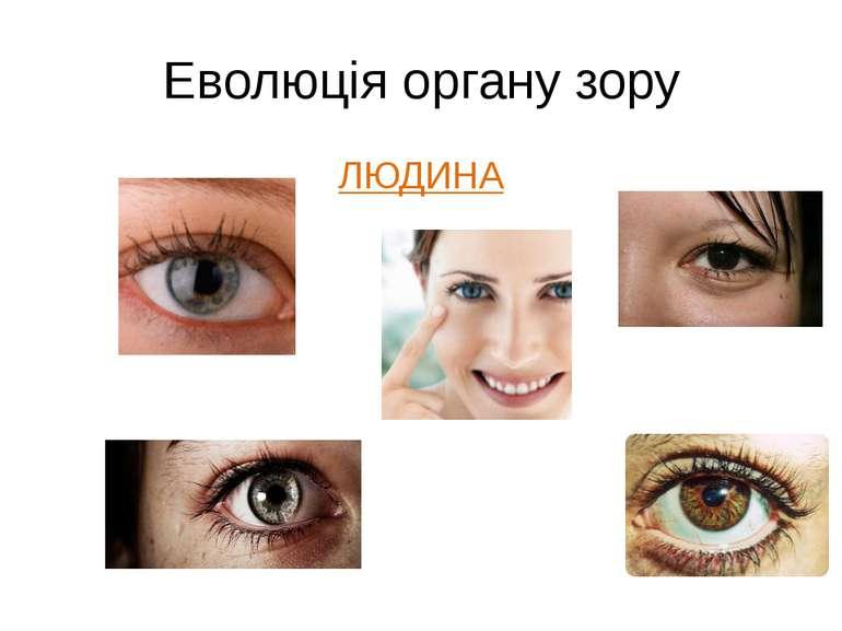 Еволюція органу зору ЛЮДИНА