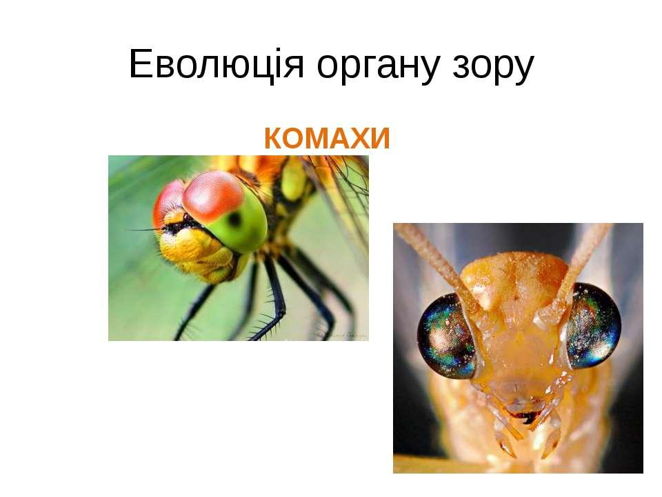 Еволюція органу зору КОМАХИ