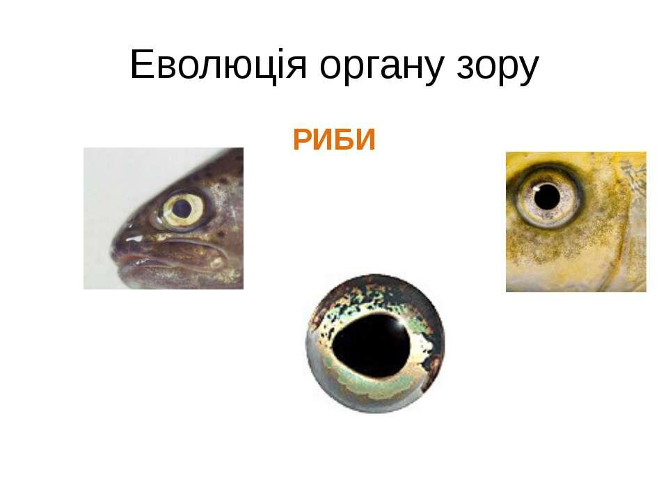 Еволюція органу зору РИБИ