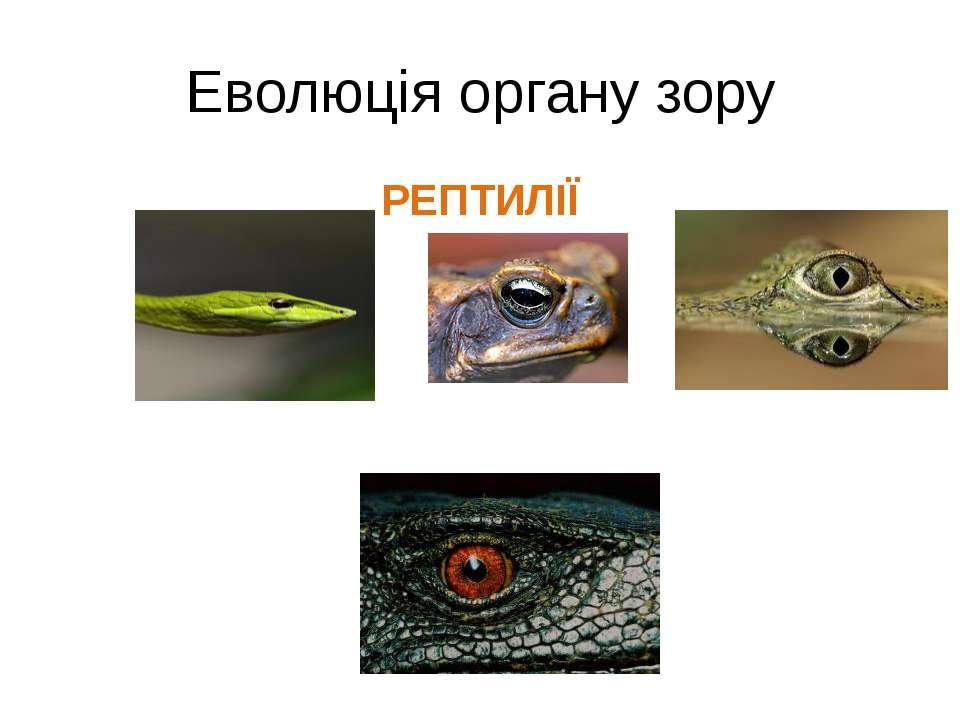 Еволюція органу зору РЕПТИЛІЇ
