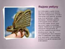 Ящірка умбуку Це істота єдина у цьому списку, яка було створена не по якихось...