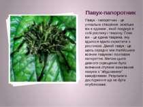 Павук-папоротник Павук - папоротник - це унікальне створіння, оскільки він є ...