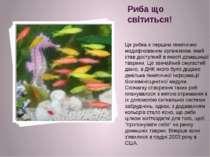 Риба що світиться! Ця рибка є першим генетично модифікованим організмом, який...
