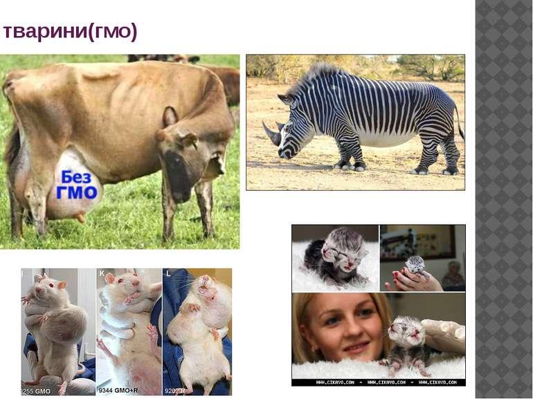 тварини(гмо)