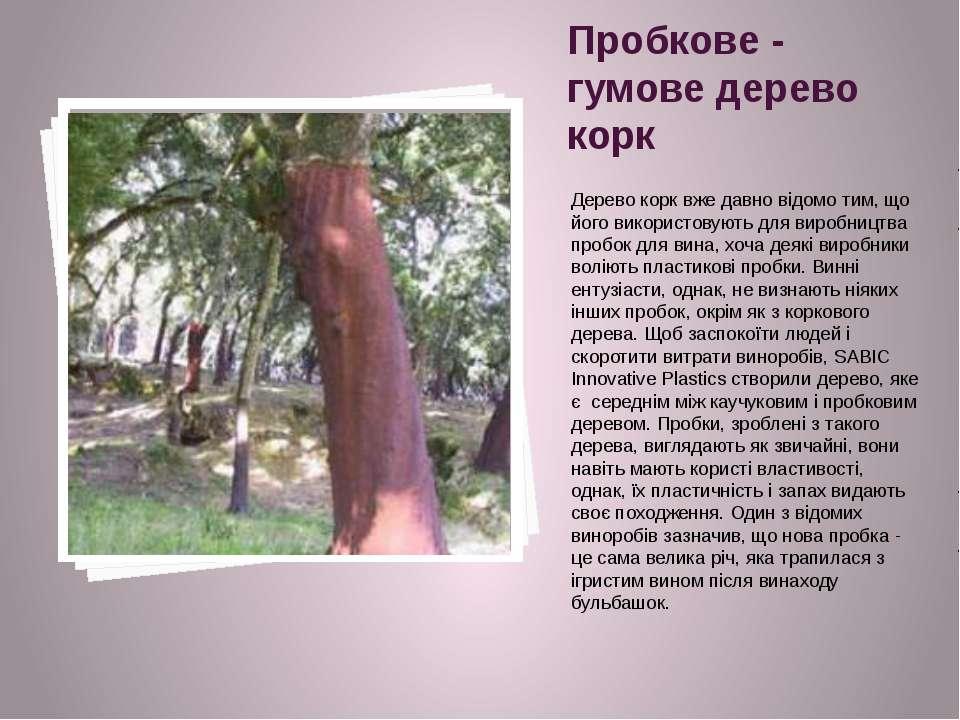 Пробкове - гумове дерево корк Дерево корк вже давно відомо тим, що його викор...