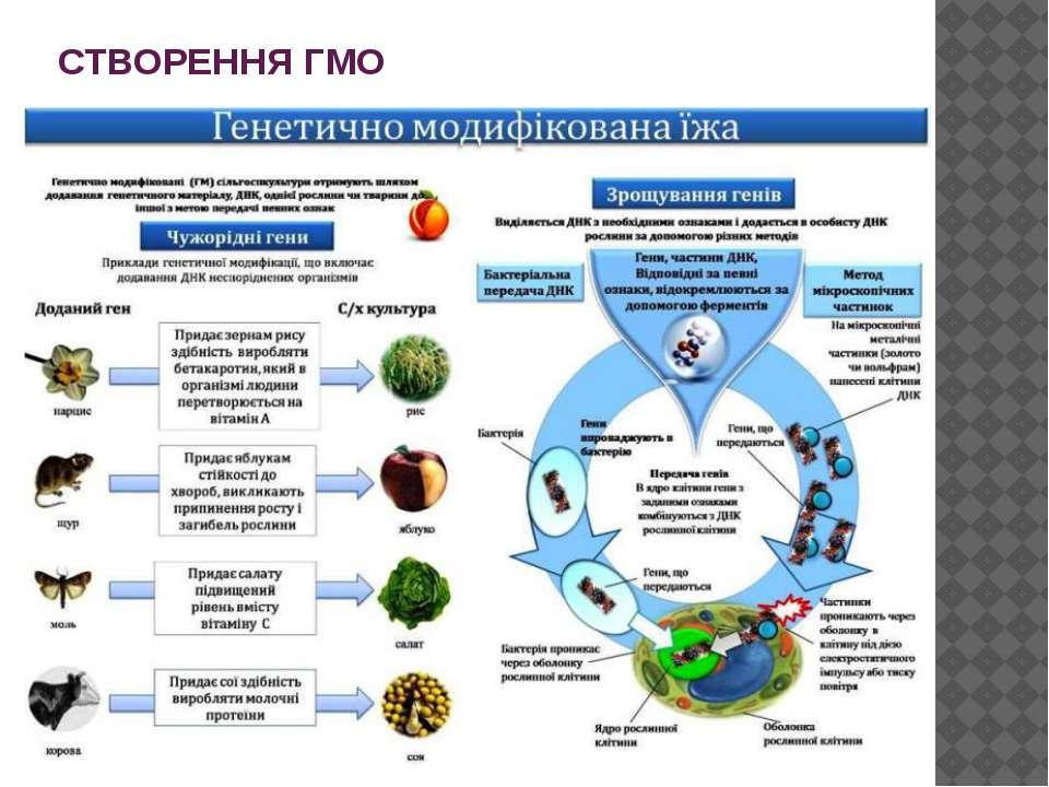 СТВОРЕННЯ ГМО