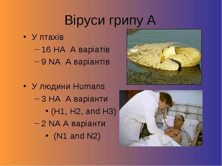 Віруси грипу А У птахів 16 HA A варіатів 9 NA A варіантів У людини Humans 3 H...