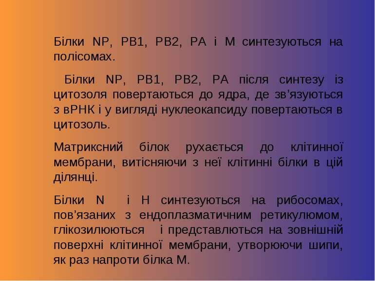 Білки NP, PB1, PB2, PA i M синтезуються на полісомах. Білки NP, PB1, PB2, PA ...