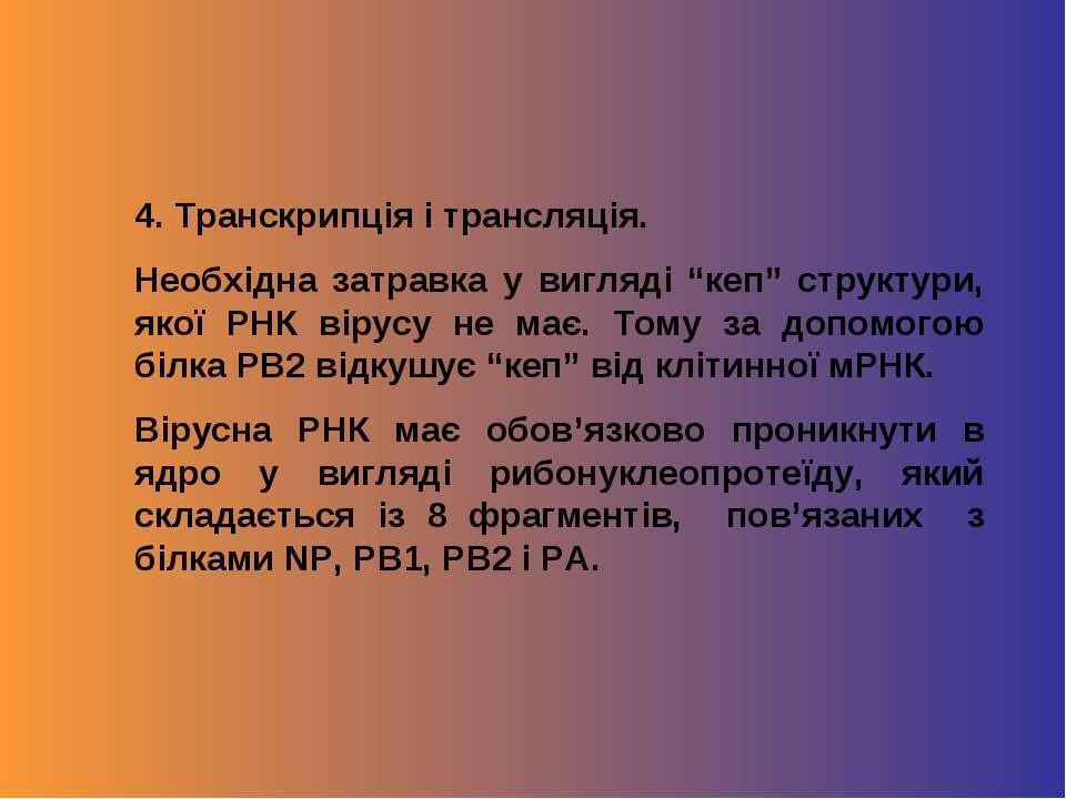 """4. Транскрипція і трансляція. Необхідна затравка у вигляді """"кеп"""" структури, я..."""