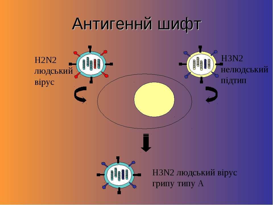 Антигеннй шифт H2N2 людський вірус H3N2 нелюдський підтип H3N2 людський вірус...