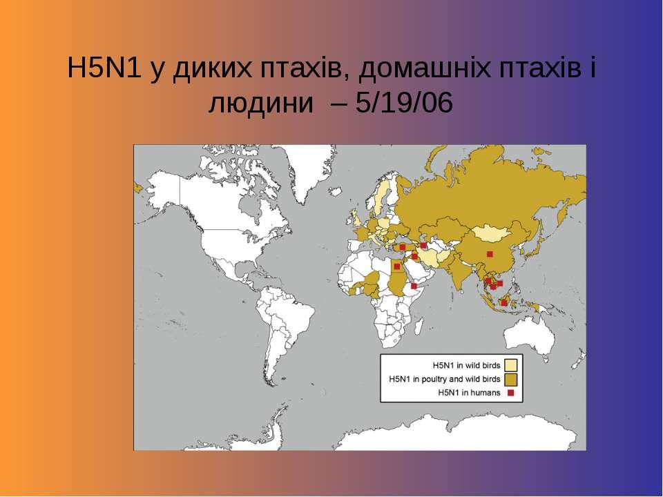 H5N1 у диких птахів, домашніх птахів і людини – 5/19/06