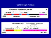 Організація генома