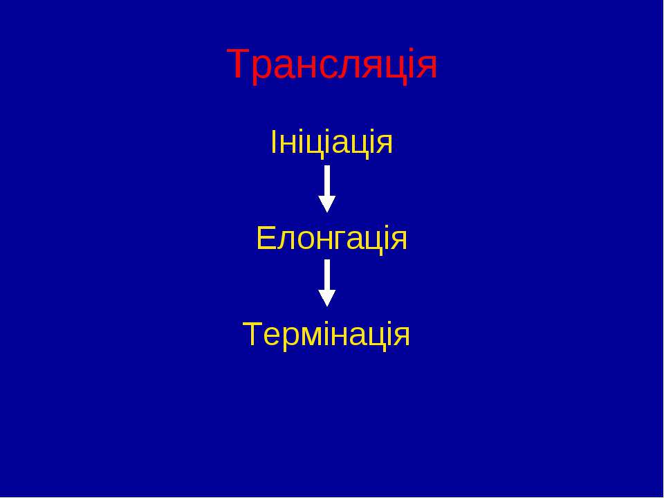 Трансляція Ініціація Елонгація Термінація