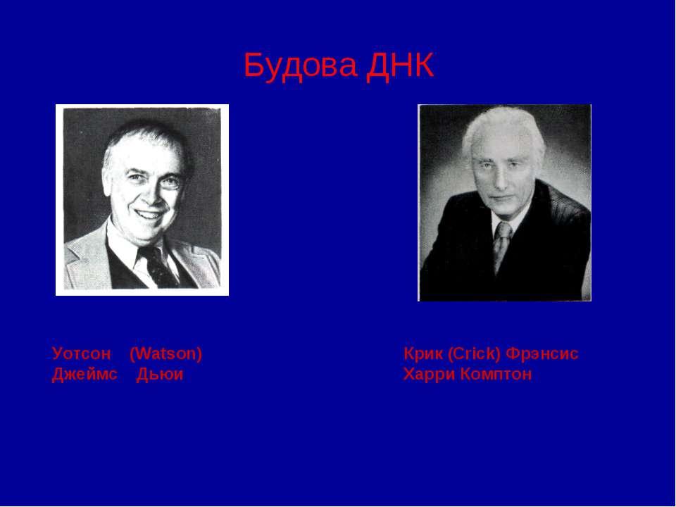 Будова ДНК Уотсон (Watson) Джеймс Дьюи Крик (Crick) Фрэнсис Харри Комптон