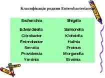 Класифікація родини Enterobacteriaceae Escherichia Shigella Edwardsiella Salm...