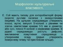 Морфологія і культуральні властивості. Е. Сoli мають типову для ентеробактері...