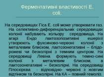 Ферментативні властивості Е. сoli. На середовищах Гіса Е. сoli може утворюват...