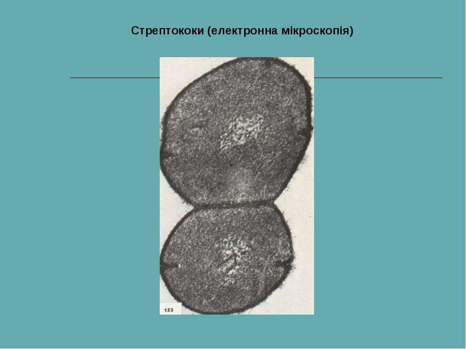 Стрептококи (електронна мікроскопія)