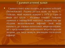 Грамнегативні коки Грамнегативні коки входять до родини нейсерій (Neisseri...